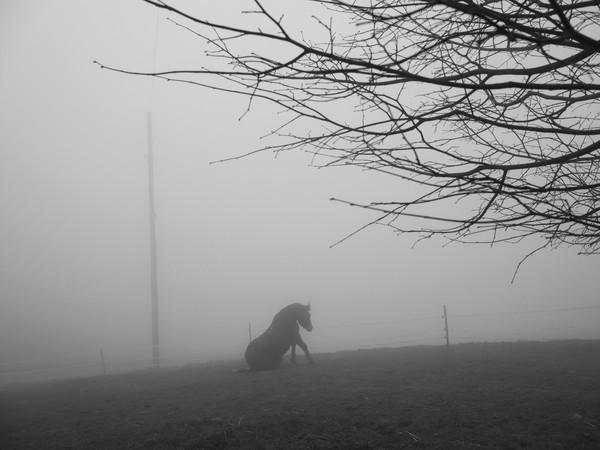 Paolo Pellegrin, A horse. Switzerland, 2020