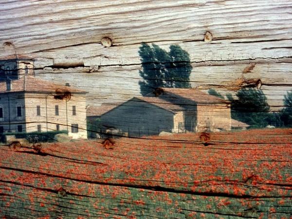 Carlo Maestri, Riflesso su un legno, 2002, fotografia su alluminio, cm. 50x70