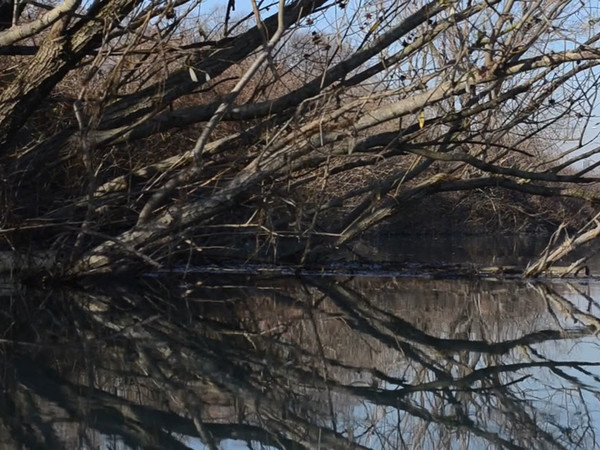 Pedro Vaz, Segunda Natureza, 2017, still da video. Doppia proiezione video, (2x) 1080x1440px, 4/3, loop. Doppia struttura di proiezione, (2x) 120x160x70cm. Legno, tela per proiezione
