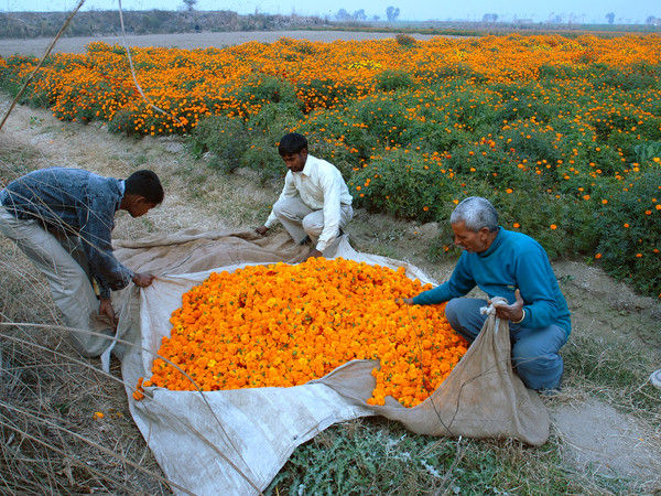 Ravi Agarwal, Have you seen the flowers on the river?, stampe fotografiche, 2007