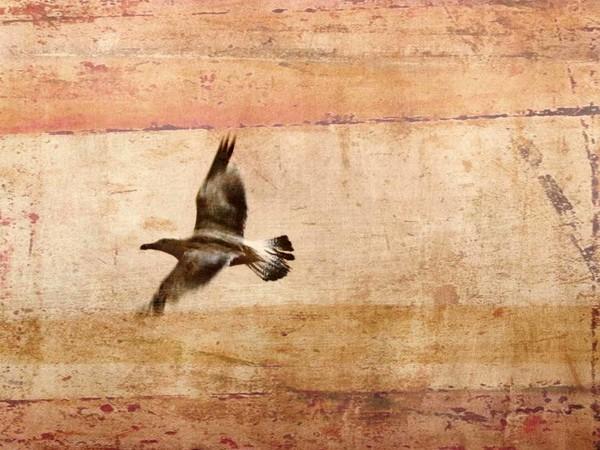 Valentina Carrera, Sorvolando il mare del nord, 2010, fotografia su carta da disegno