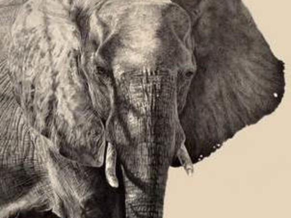 Giorgia Oldano. Animalia