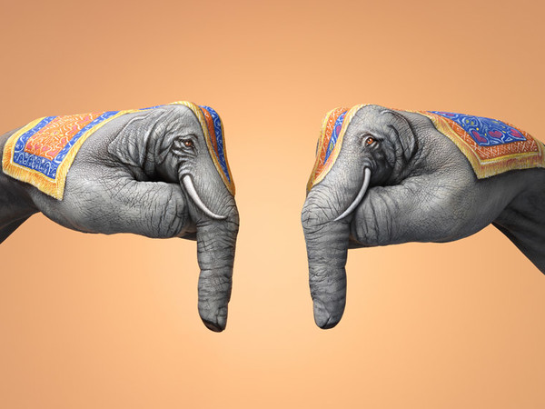 Guido Daniele, India Elephants