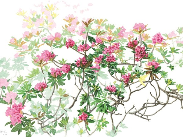Margherita Leoni, Rhododendron ferrugineum