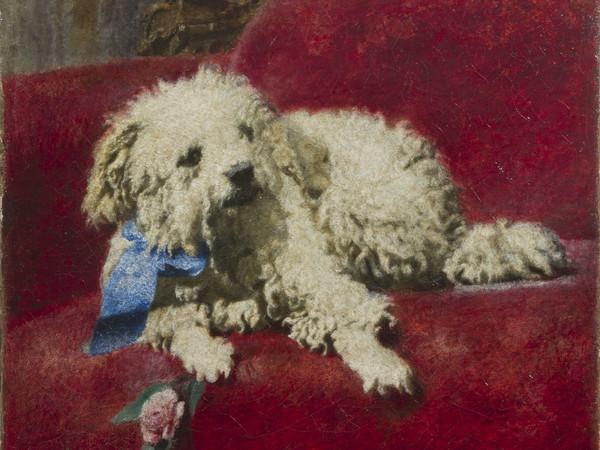 Daniele Ranzoni, Barboncino bianco, olio su tela, 37 x 44 cm