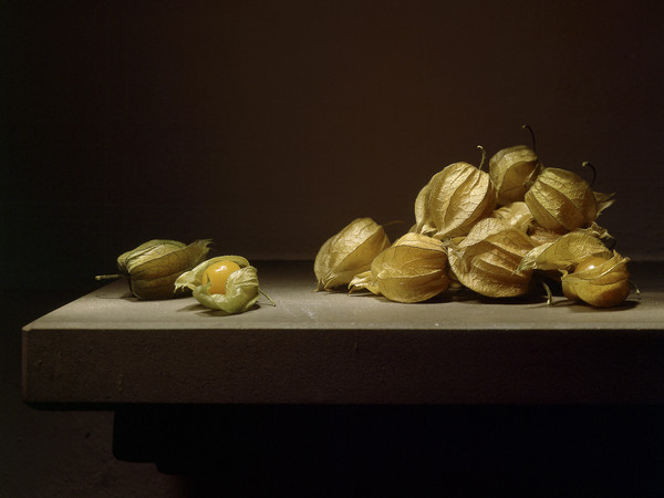 Mauro Davoli, Alkekengi, 2001, 90 x 60 cm | © Mauro Davoli