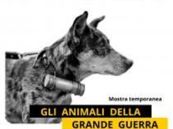 Gli Animali della Grande Guerra, Scuola Primaria della Vittoria, Padova