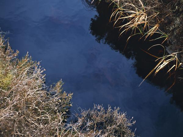 Willie Doherty, Dead Pool II, 2011. C-print montata su alluminio, 122x152 cm.