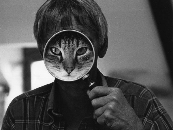 David McEnery, Cat Face