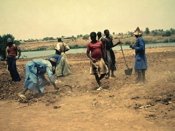 Bouba Touré, Preparation of the land, cooperative of Somankidi Coura, 1977