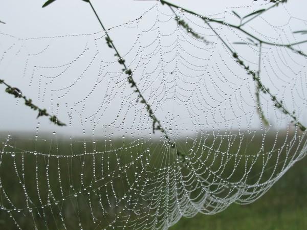 Sandra Binion, Spider web, stampa inkjet d'archivio, 2016, 46x61 cm.