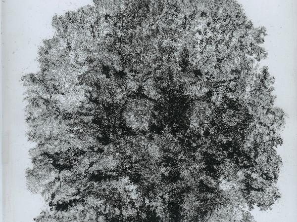Cesare Leonardi,&nbsp;<em>Quercus cerris (estate)</em>, 1978&ndash;1982. China su lucido, 50 x 62 cm