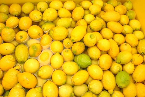 The lemons of Sorrento, he sole component for the Limoncello, the sweet liqueur has become a must in the world | Photo: Richardthelion, via Pixabay